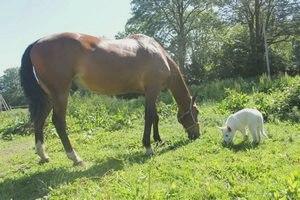 Блог о белой швейцарской овчарке: Лошади у Океана