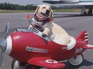Авиаперелет с питомцем. Условия перевозки животных авиакомпанией LOT