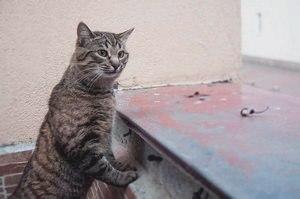 Кто главная кошка в стае? - портал о животных WikiPet