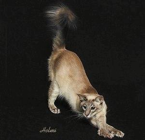Яванез (Яванская кошка)